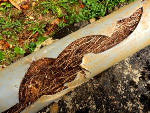 Damaged Sewer Pipe Needs Inspection